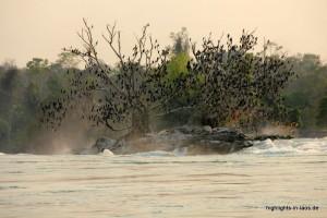 Baum an den Mekongfällen